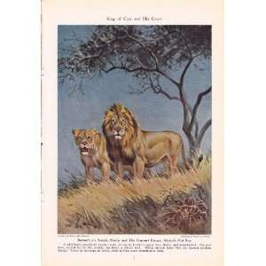 1943 African Lion   King of Cats and His Court   Vintage