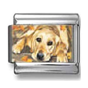 Golden Retriever Dog Photo Italian Charm