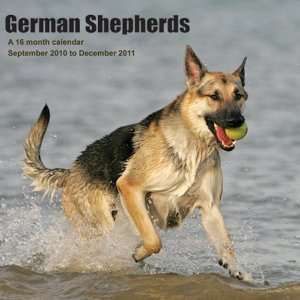 2011 Dog Calendars German Shepherds   16 Month   30x30cm